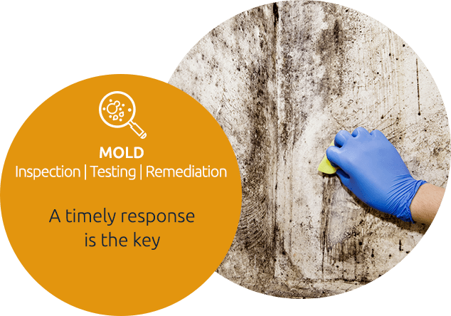 Mold Testing & Inspection